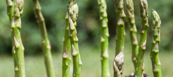 Comment faire pousser les asperges, astuces pour cultiver les asperges