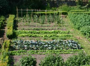 jardin potager 300x218 photo