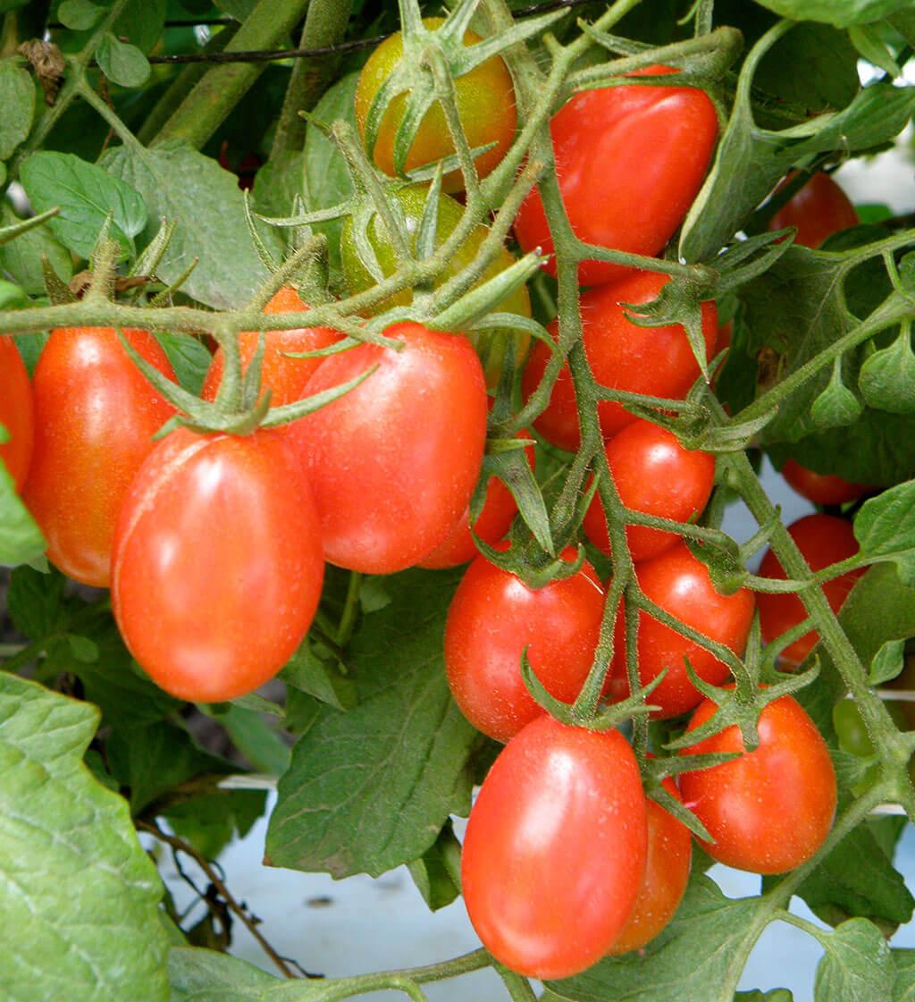 Qu'allez-vous planter cette année dans votre jardin potager ?