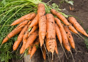 carrotes