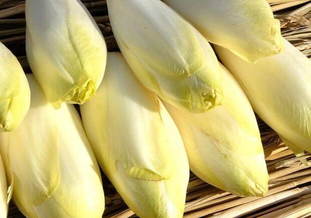 Conseils sur comment faire pousser des endives à partir de graines