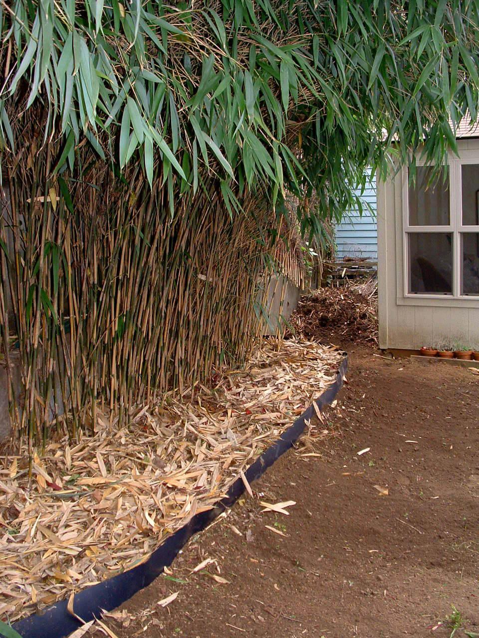 Comment installer une barrière à rhizome pour contrôler des bambous ...