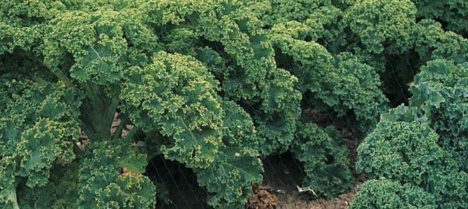 Les 6 légumes les plus rentables à cultiver dans votre jardin