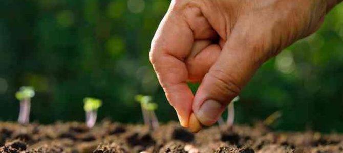 15 légumes dont vous pouvez semer les graines en mars