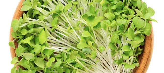 5 légumes à faire pousser pour manger les graines germées et pousses