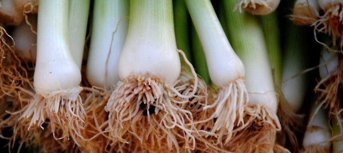 10 légumes que vous pouvez faire pousser à partir des restes