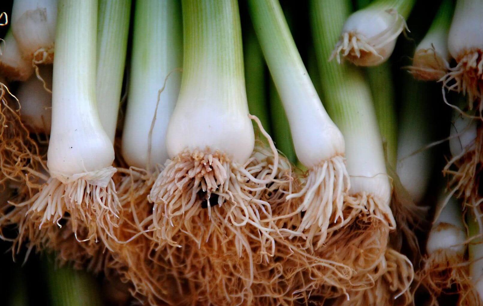 Faire Pousser Du Persil En Appartement 10 légumes que vous pouvez faire pousser à partir des restes