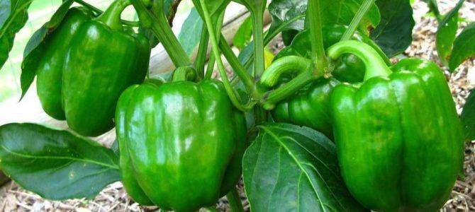 10 légumes qui poussent bien même quand il fait très chaud