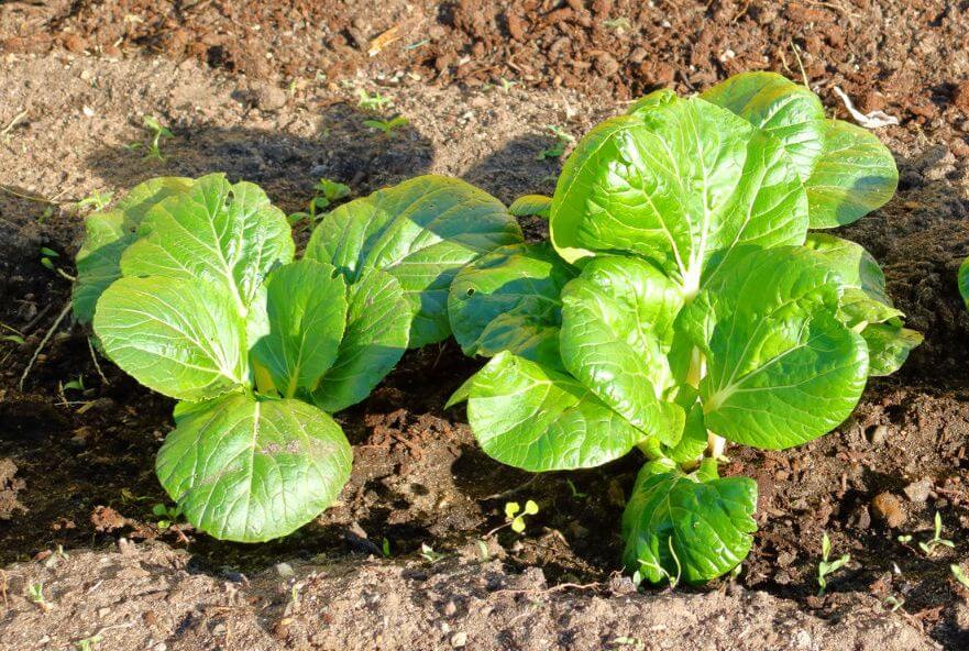 5 cultures que vous pouvez encore planter en septembre | Le Potager