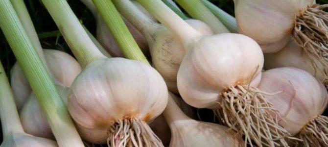 6 cultures que vous pouvez semer en octobre