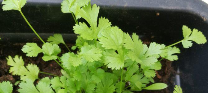 10 herbes et plantes aromatiques à cultiver sur son balcon