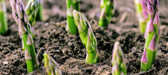 5 légumes que l'on peut encore planter ou semer en novembre en extérieur