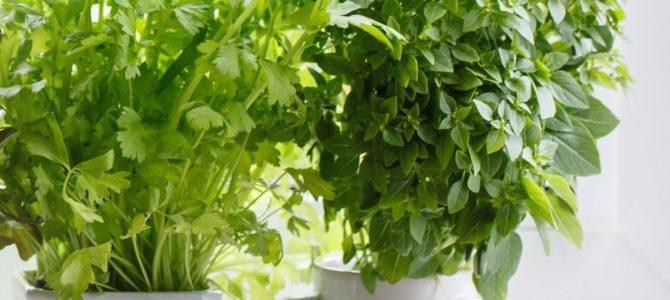 7 légumes que vous pouvez cultiver à l'intérieur en hiver
