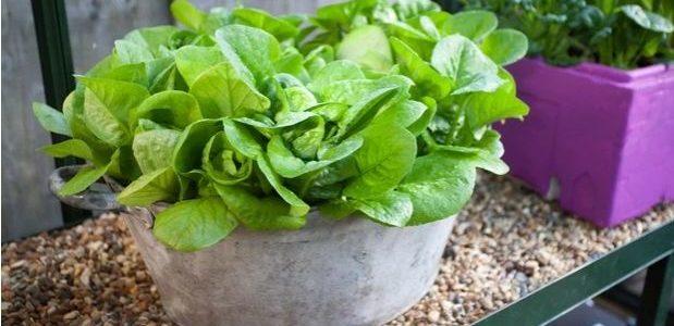 6 légumes dont vous pouvez semer les graines en décembre