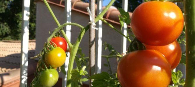 6 conseils pour le potager que tout nouveau jardinier doit connaître