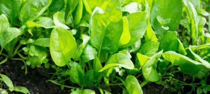 5 légumes super précoces à faire pousser en hiver