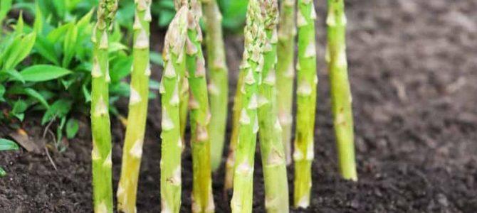 Les 6 meilleurs légumes à faire pousser au début du printemps