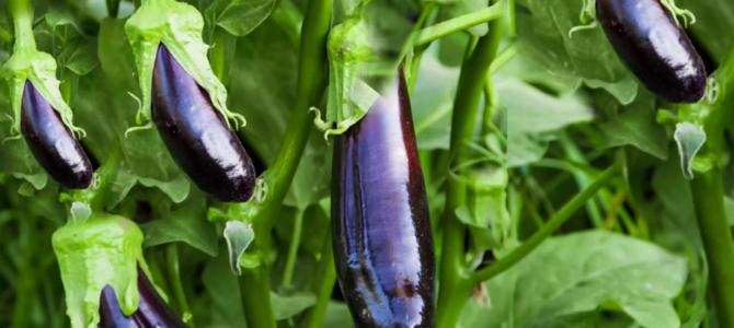 Les 10 meilleurs légumes qui poussent dans des conteneurs