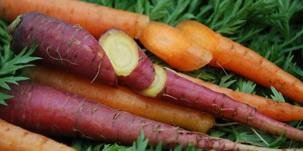 8 légumes excellents pour la santé que vous pouvez semer en mars