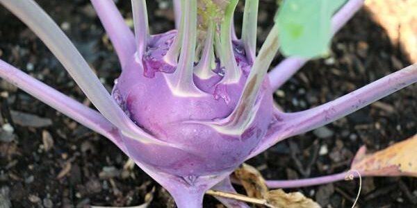 13 légumes que vous pouvez faire pousser au début du printemps