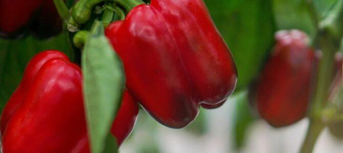 9 légumes que vous pouvez commencer à cultiver en avril