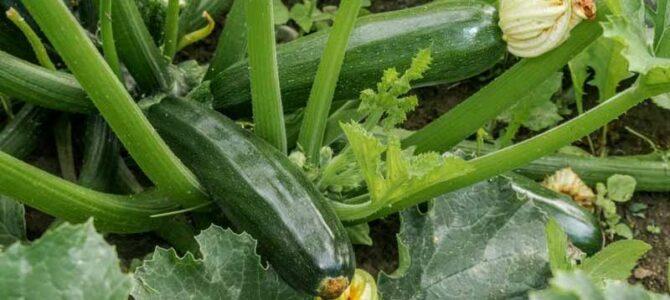 Liste de 20 légumes à faire pousser au mois de mai