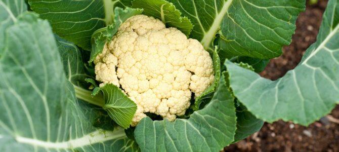 24 fruits et légumes à récolter au mois de juin