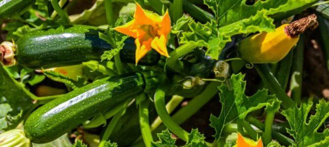 18 légumes à faire pousser en été