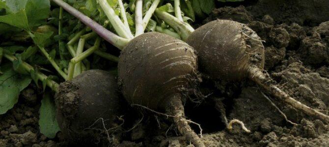 25 légumes que vous pouvez encore semer en juillet