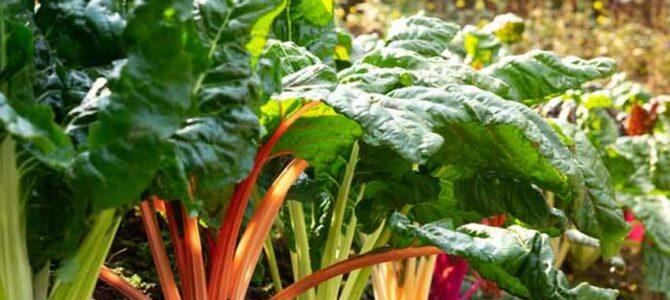 27 légumes et herbes à semer ou transplanter en août