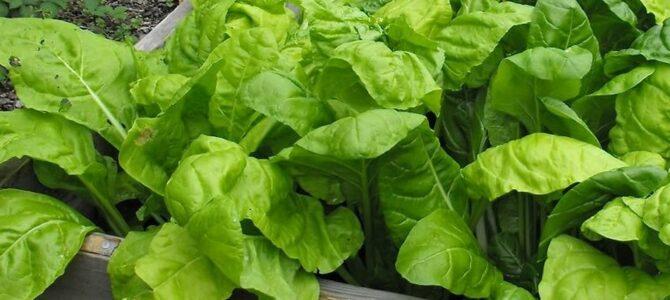 15 légumes à croissance rapide à planter en septembre