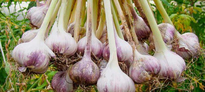 15 légumes à faire pousser en octobre