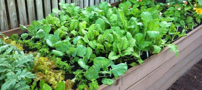 5 choses à faire dans son jardin potager en octobre